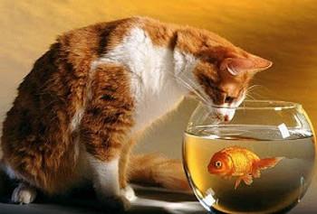 kucing makan ikan