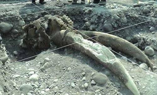 fosil gajah purba tegal