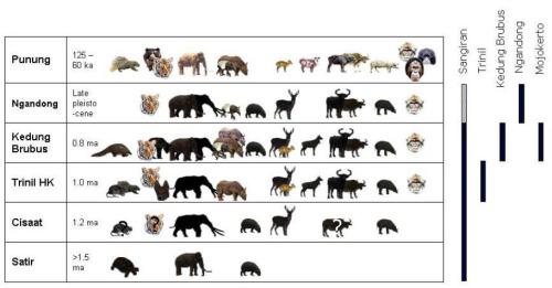 (Biostratigrafi paleontologi bertebrata Jawa, diambil dari Hertler dan Rizal, 2005)