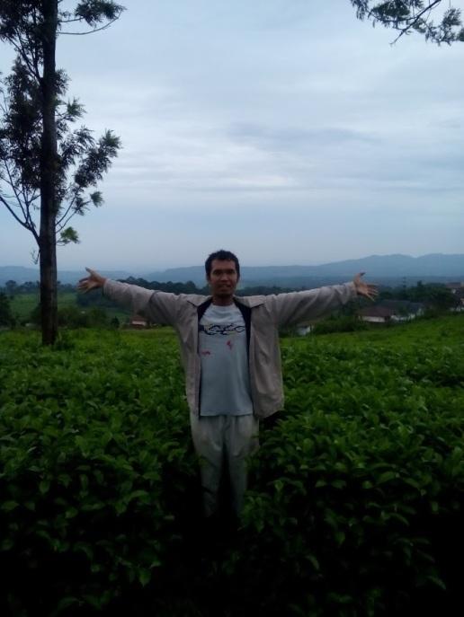 tea walk di kebun teh